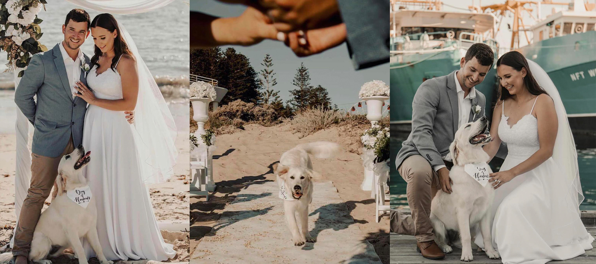 Weddings with your Fur Baby | Dog of Honour